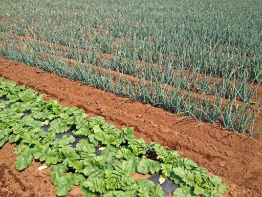 生産緑地2022年問題
